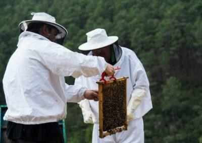 apicultura-bienestar-en-el-medio-rural