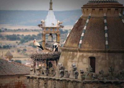 ciguenas-torre-caceres-patrimonio