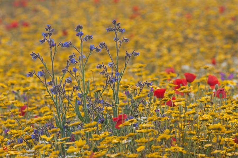 flores-en-monfrague