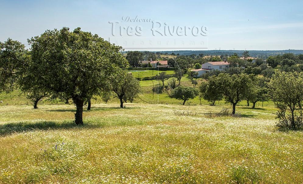 DEHESA TRES RIVEROS